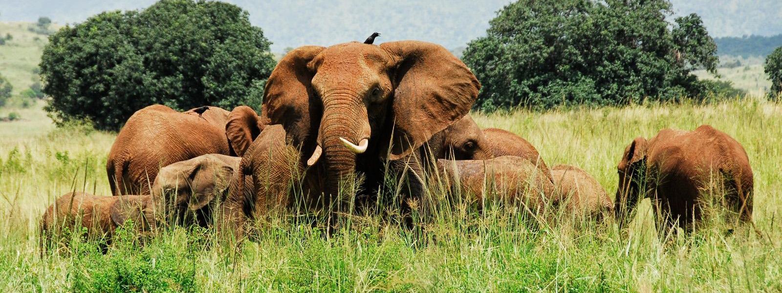 Wildlife & Gorilla Safaris Uganda