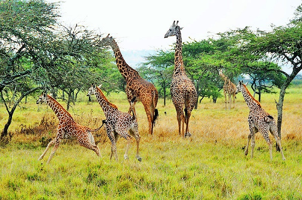 10 Days Best of Rwanda Safari