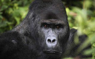 3 Days Lowland Gorilla Trekking