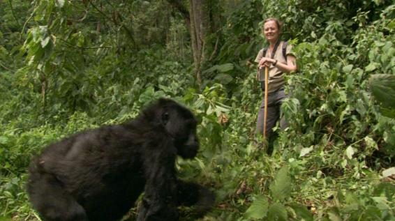 Affordable 3 Days Rwanda Gorilla Trek