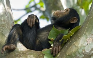 5 Days Rwanda Primates Safari