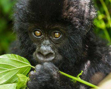 5 Days Virunga & Nyiragongo