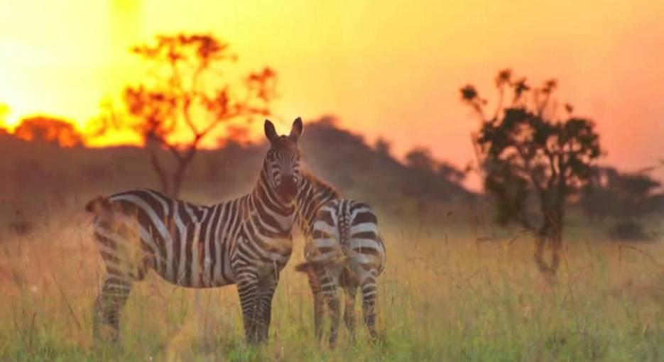 3 Days Kidepo Fly In Safari