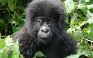 3 Days Gorilla Tracking Bwindi